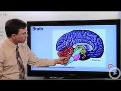 Nervous System  The structure and function of the nervous system. #science
