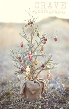 This precious tiny live Christmas tree with vintage inspired ornaments is so dang cute!