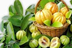 What is Garcinia Cambogia and how does it work? The HCA within Garcinia Cambogia seems to help inhibit a fat producing enzyme in the liver called citrate lyase. This enzyme is responsible for turning excess carbohydrates into fat. Loose 20 Pounds, 10 Pounds, Garcinia Cambogia Diet, Nutrition, Weight Loss Supplements, Ayurveda, Herbalism, Fat Burner, Lose Weight
