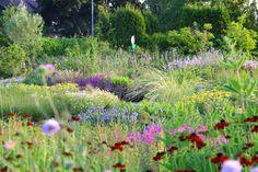 8 Gorgeous Piet Oudolf Garden Design Ideas for Summer Public Garden, Private Garden, Summer Pictures, Utrecht, Beautiful Gardens, Garden Landscaping, Roots, Garden Design, Backyard