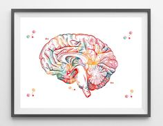 Brain anatomy cross section view watercolor print human brain limbic system poster medical art neurology illustration anatomy art decor