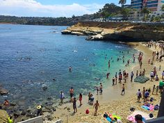 La jolla cove tide pools and beach!
