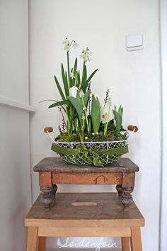 seidenfeins Blog vom schönen Landleben: Frühlingskörbchen * spring in a basket