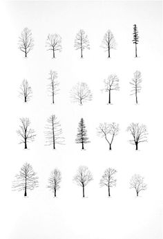 Katie-Holten-Trees-of-the-U.S.A.-III