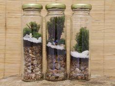Jardim na palma da mão: Amigas reutilizam vidros para criar terrários com…