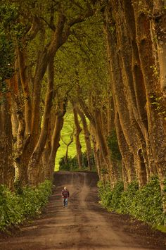 I went to the woods... by Joe Taruga on Flickr. São Miguel Woods,  Azores, Portugal