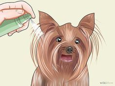 9 Ways to Groom a Yorkshire Terrier - wikiHow