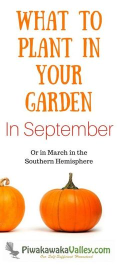 Knowing what to plant in your September garden is very helpful for planning your garden. This is also what people in the Southern hemisphere should plant in March!