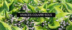 vivaces-couvre-sols