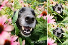 I is a flower.
