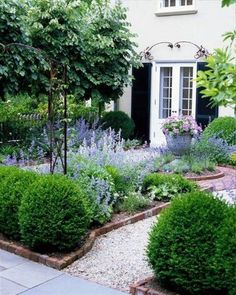 charming small garden, boxwoods, lavender, gravel path, brick edging, black shutters,