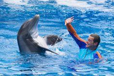 Make a Splash During #SpringBreak at #SeaWorld #Orlando