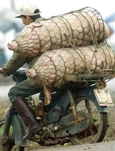 Ich hab auf dem Heimweg noch schnell zwei Schweinachtsbäume gekauft!
