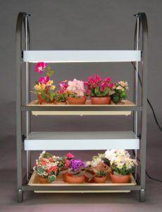 Indoor plant stands with fluorescent lighting and beautiful indoor plants.