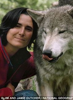 White Wolf: Amazing images of wolves as they were seen by the couple who lived in a ten for SIX YEARS to better.