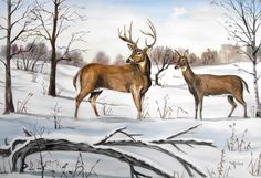 'Early Snow'  Whitetail deer 16x20 Watercolor