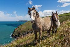 #Pembrokeshire Coast Path, Newport, United Kingdom  #Canon - Canon EOS 60D, 1/4000s, f/6.3, 17mm, ISO 100