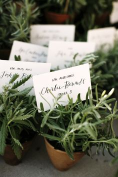 Potted fresh herbs as favors/table numbers. @Emily Barringer Cute idea to do chalkboard pots and write table number. Stick name card in pot.