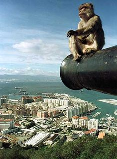 The Rock of Gibraltar. Gibraltar. British territory in the Mediterranean Sea. Of the coast of Spain with views of Spain and Morocco, Africa. Do NOT feed the monkeys.