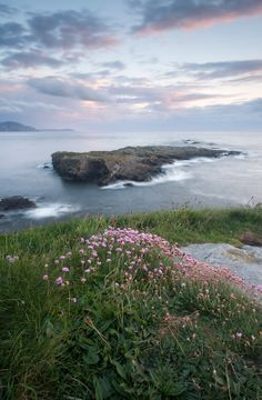 Colourful Thrift at Niarbyl, Isle of Man