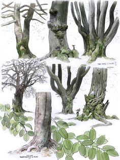 Drawing Trees|A Detailed Infographic On The Parts Of Different Trees|From:AnatoRef|-I can see this being a huge help in drawing Trees. Mainly because each individual part of the tree is singled out and clearly shown so the artist is able to see exactly what needs to be drawn.