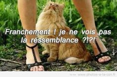 image drole chatte