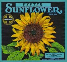 Rare SUNFLOWER Orange CITRUS BOX Label from Exeter, California, in FRAME
