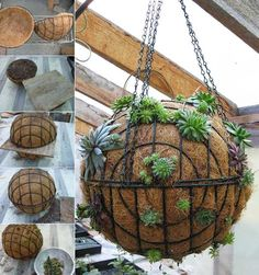 Punctuate your garden with a Succulent Sphere; make your own globes or orbs planted with Sempervivum & succulents for a unique garden craft; simple to make and plant. Garden Spheres, Garden Balls, Garden Pots, Hanging Succulents, Succulents In Containers, Cacti And Succulents, Hanging Plants, Succulent Landscaping, Succulent Gardening