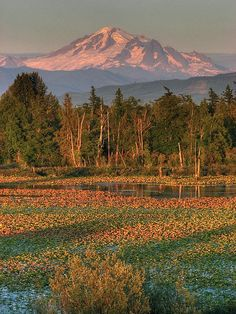 Mt. Baker in evening glow,  Mount Baker Wilderness and the Mt. Baker-Snoqualmie National Forest, Washington