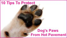 10 Tips To Protect Your Dog's Paws From Hot Pavement  ... see more at PetsLady.com ... The FUN site for Animal Lovers