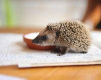 hedgehog: I am ready to go somewhere...