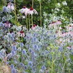 Stipa, 49er, Garden Plants, My Design, Romantic, Photo And Video, Outdoor, Instagram, Videos