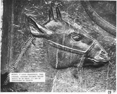 """The okapi was depicted in ancient Egyptian hieroglyphs as a strange horse-like animal. This also suggests this animal had a much greater range. For decades, Europeans visiting Africa heard stories of a creature called by the locals, """"atti"""". The Europeans donned it the African unicorn. Explorers saw only the striped backsides fleeing from their presence, leading them to believe it was a rainforest-dwelling Zebra."""