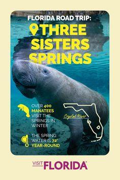 Visit Florida, Florida Vacation, Florida Travel, Travel Usa, Florida Trips, Vacation Destinations, Vacation Spots, Vacations, Rock Springs