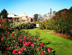 No need to buy a dozen roses on Valentine's Day. Instead, spend a free, romantic afternoon in the Rose Garden at Exposition Park, LA, CA California Dreamin', Los Angeles California, Stuff To Do, Things To Do, Dozen Roses, Upscale Restaurants, I Love La, Rose Park, City Of Angels