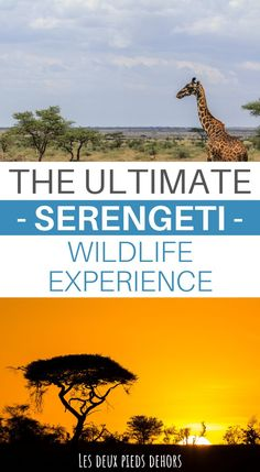Are you going to Tanzania for a photo safari? A safari in Tanzania's Serengeti National Park is a must to do ! Kenya Travel, Africa Travel, Parc National, National Parks, Safari Photo, Africa Destinations, Travel Destinations, Tanzania Safari, Serengeti National Park