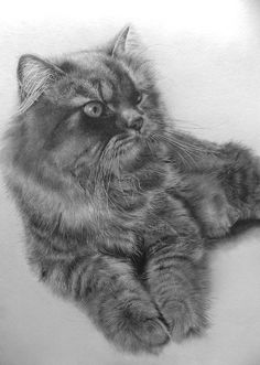 Pencil drawing  --Paul Lung