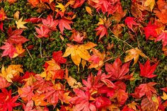 Tips for Photographing Autumn Colors | Picture Correct