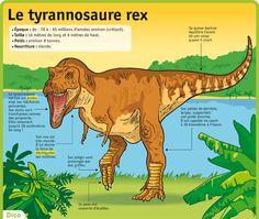 http://www.lepetitquotidien.fr/media/infography/mag/lpq-35/lpq35-le-tyrannosaure-rex.jpg