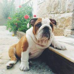 Relaxing bully. AC