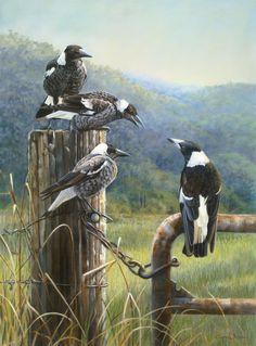 The Gate Post Gang - Australian magpies by Lyn Ellison Australian Painting, Australian Animals, Australian Artists, Bird Artwork, Rabe, Watercolor Bird, Wildlife Art, Beautiful Birds, Pet Birds