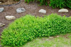 Bonsai, Home And Garden, Yard, Exterior, Landscape, Outdoor Decor, Green, Flowers, Gardens