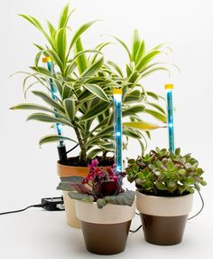 DIY Grow Lights    Create a light system to keep houseplants thriving during the short days of winter. Sunshine Sticks	 Luis Bruno.   http://www.popsci.com/lightspikes