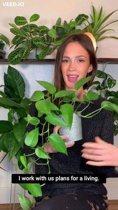 House Plants Decor, Plant Decor, Garden Plants, Indoor Plants, Growing Plants Indoors, Inside Plants, Plant Aesthetic, House Plant Care, Garden Projects