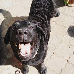 Porządki na całego  Kto zgadnie  Jak się kończy pranie Labradora?  #jakuczyc #mama #labrador #kompiel  #radość #psy