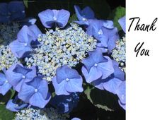 Thank You Blue and White #Flower Greeting Card