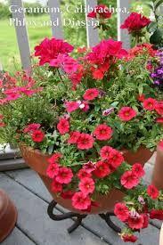 Resultado de imagem para Container Garden Planting Calibrachoa
