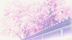 #sakura #pink