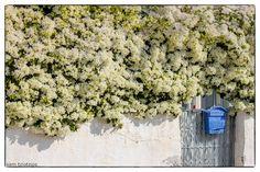 Photo of the Day – November 20 2016 Rainy Weather, Argos, Sunny Days, Greece, Herbs, Nature, Photos, Greece Country, Naturaleza