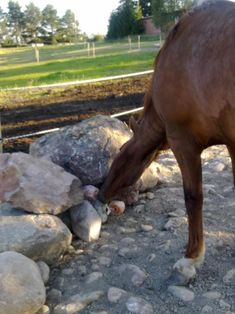 Homemade horse slow feeder for two horses. Holds a whole ...